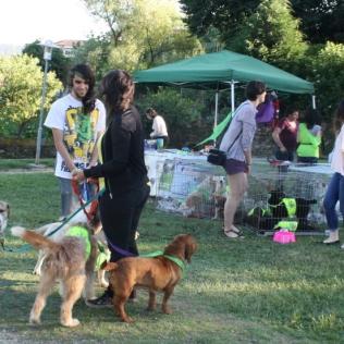 Cans do Refuxio de Bando